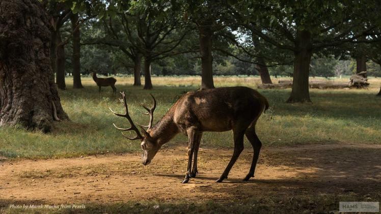 An introduction to adaptive wildlife management