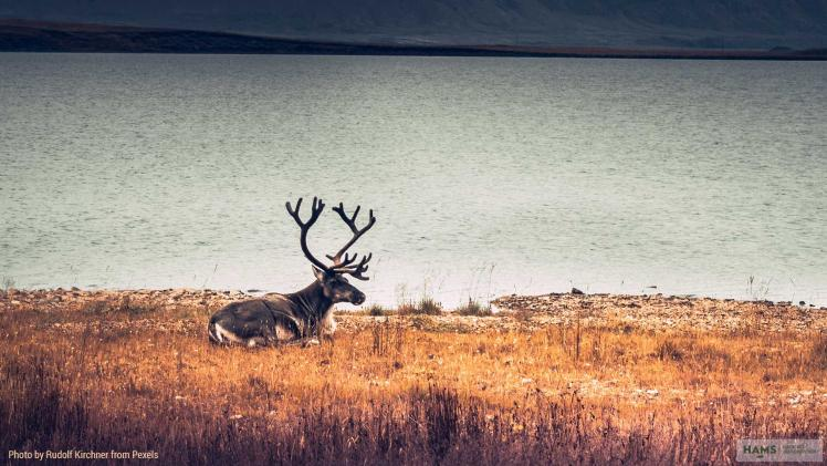 The fundamental role of habitat management in wildlife conservation