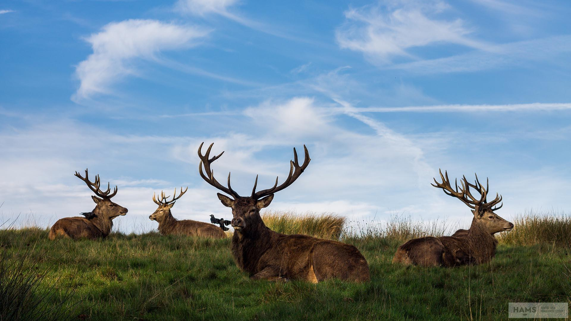 Want better antlers, more meat and higher quality populations?