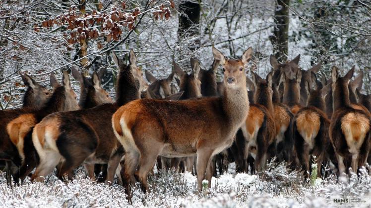 Deer Management methods Volume 1. - Austria